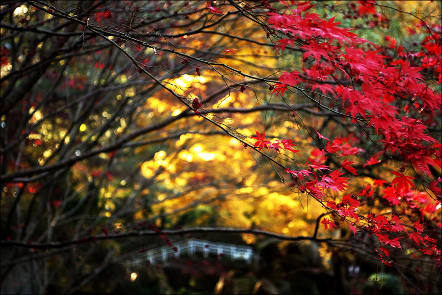 Photograph Harmony in Autumn by D W Kim on 500px