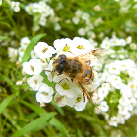 Another bee, Canon POWERSHOT G9
