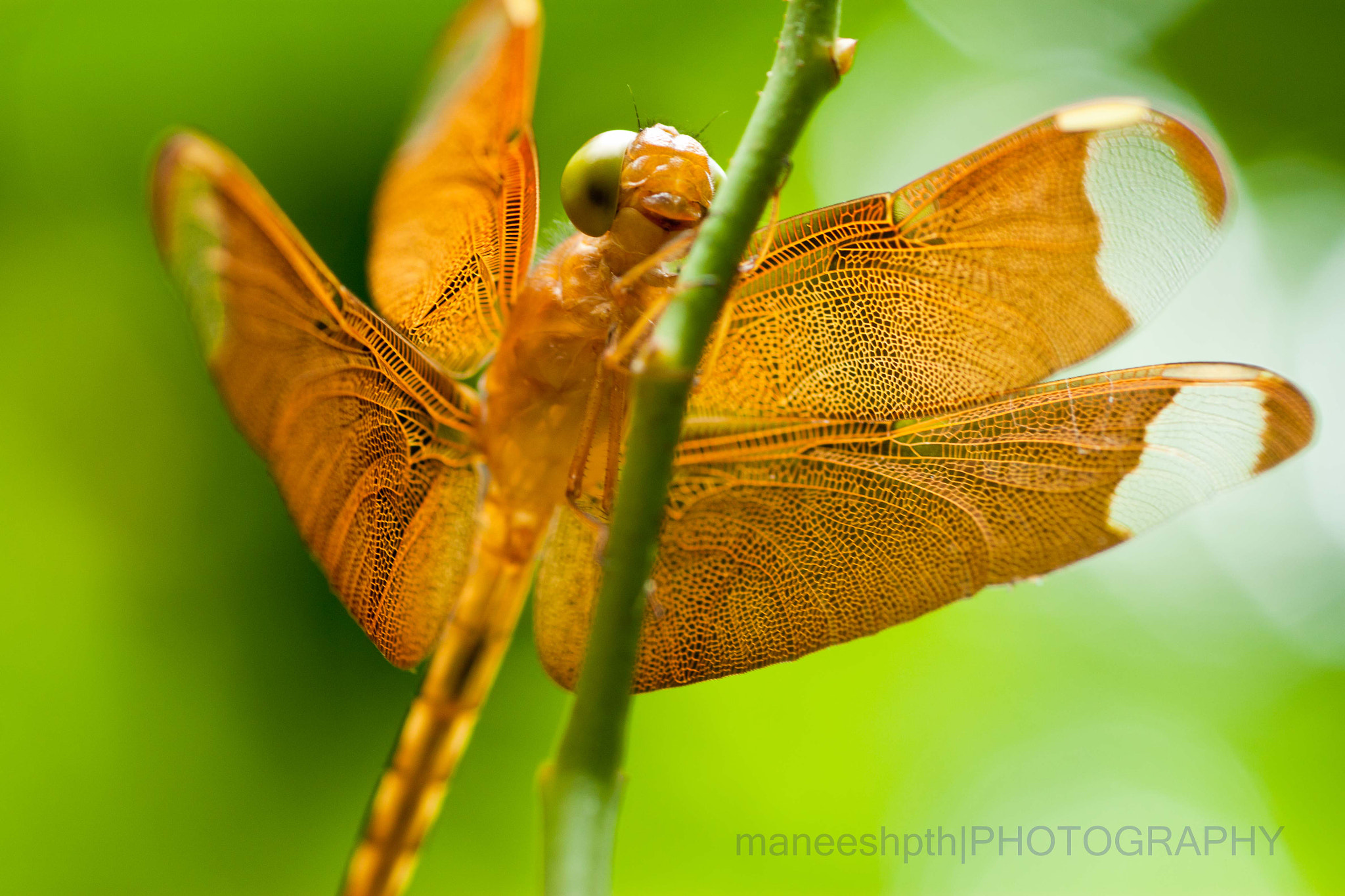 Photograph the dragonfly! by maneesh p on 500px