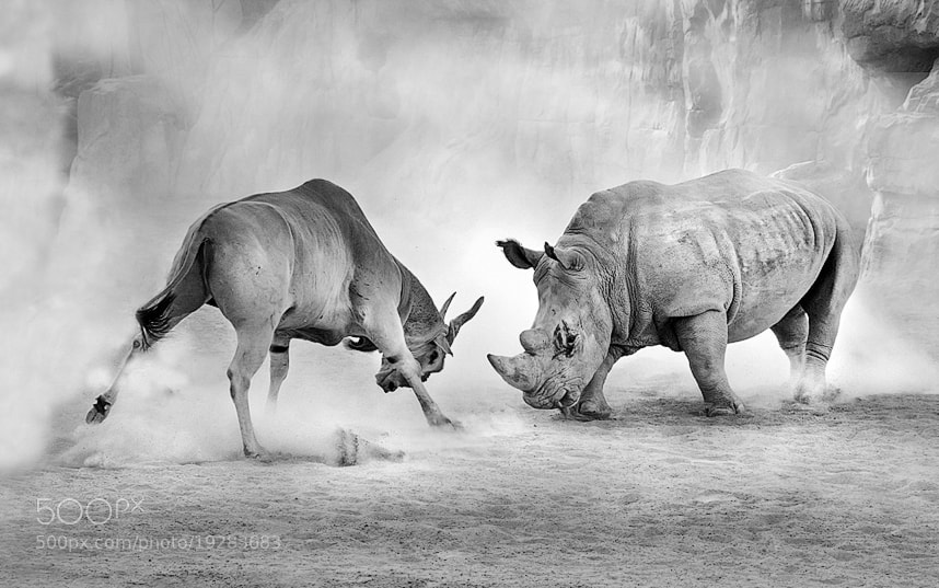 Photograph combat by Juan Luis Durán on 500px