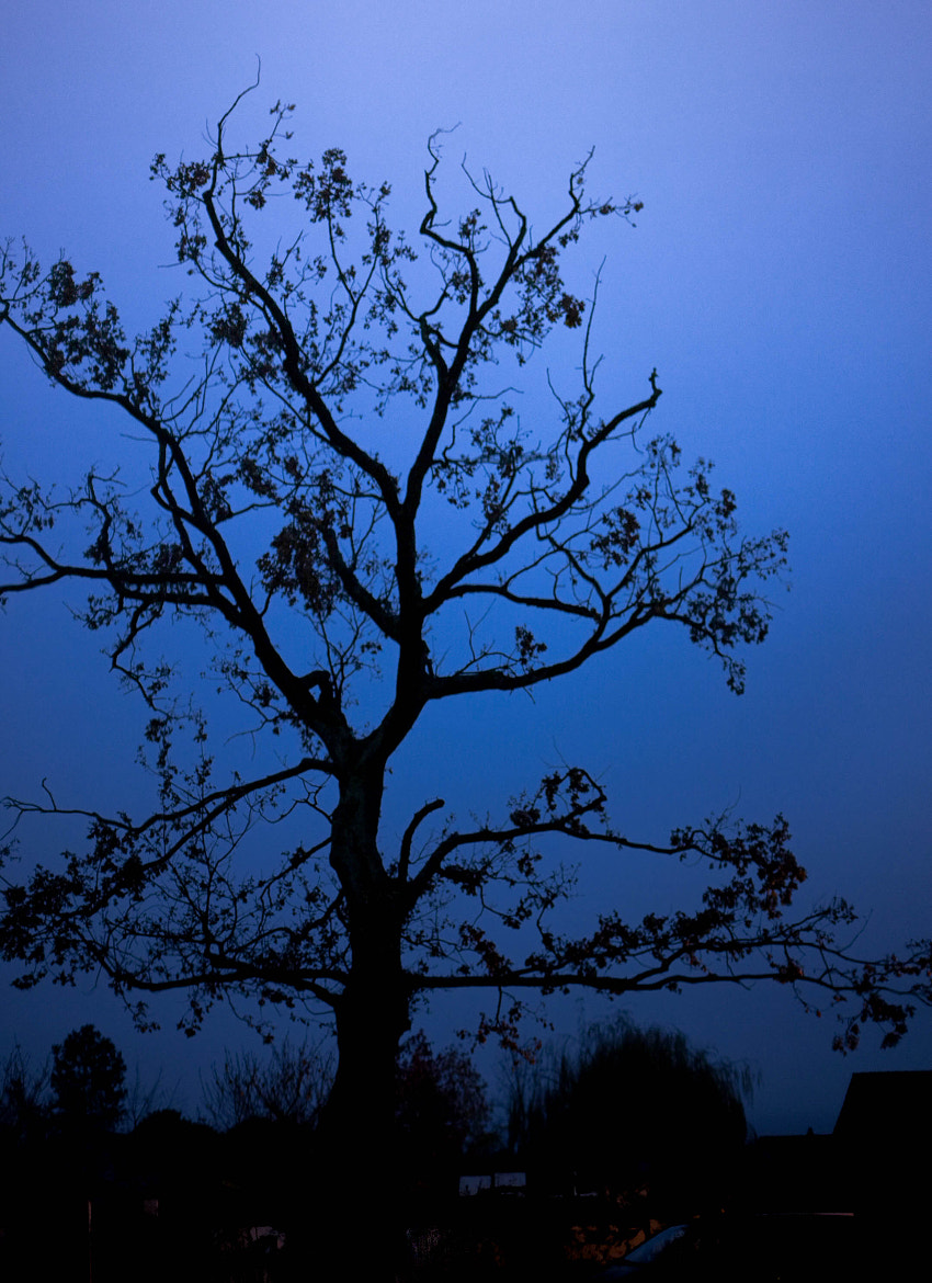 Photograph Tree at dusk by pierre leone on 500px