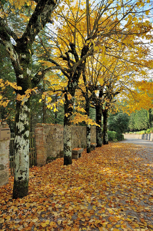 Photograph Autumn Time in Camporsevoli... by Renato Pantini on 500px