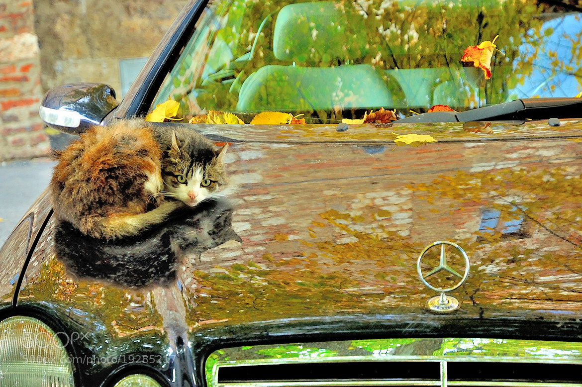Photograph Colorful Cat & Car... by Renato Pantini on 500px