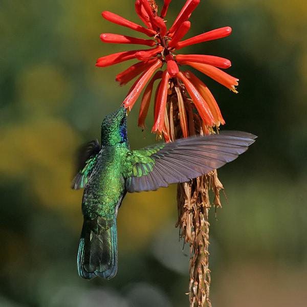 Photograph Dining Green Violet - Ear  by Aat Bender on 500px