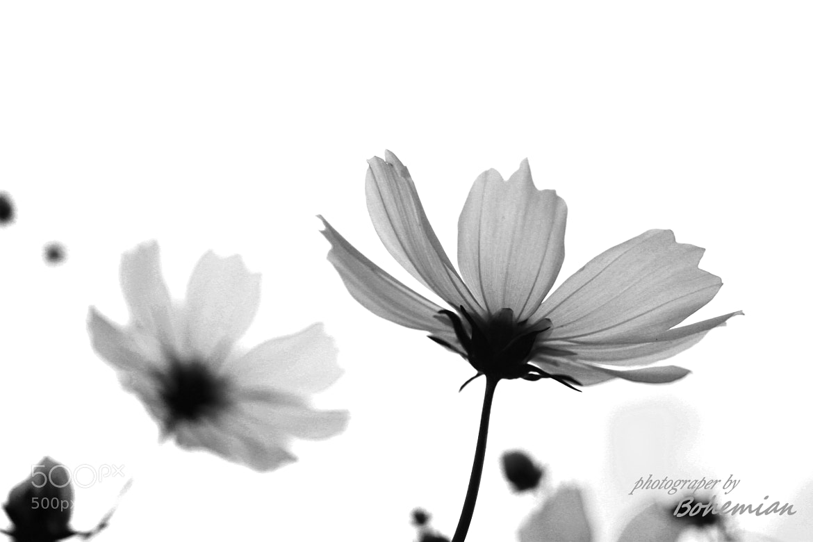Photograph Cosmos by LeoH KIM on 500px