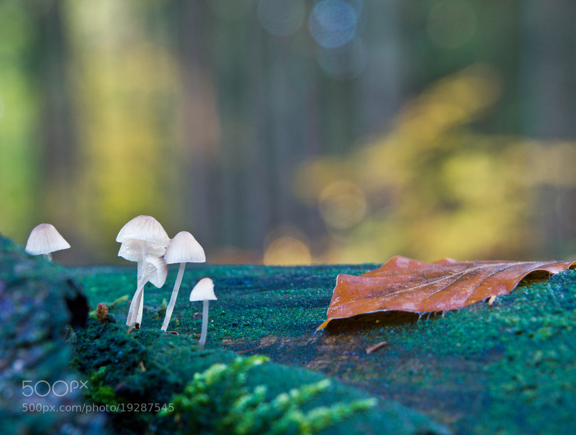 Photograph In the forest by Michael Lüdtke on 500px
