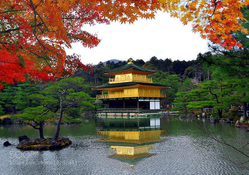 Photograph Autumn..///..Kinkakuji Temple. by Bu Balus on 500px