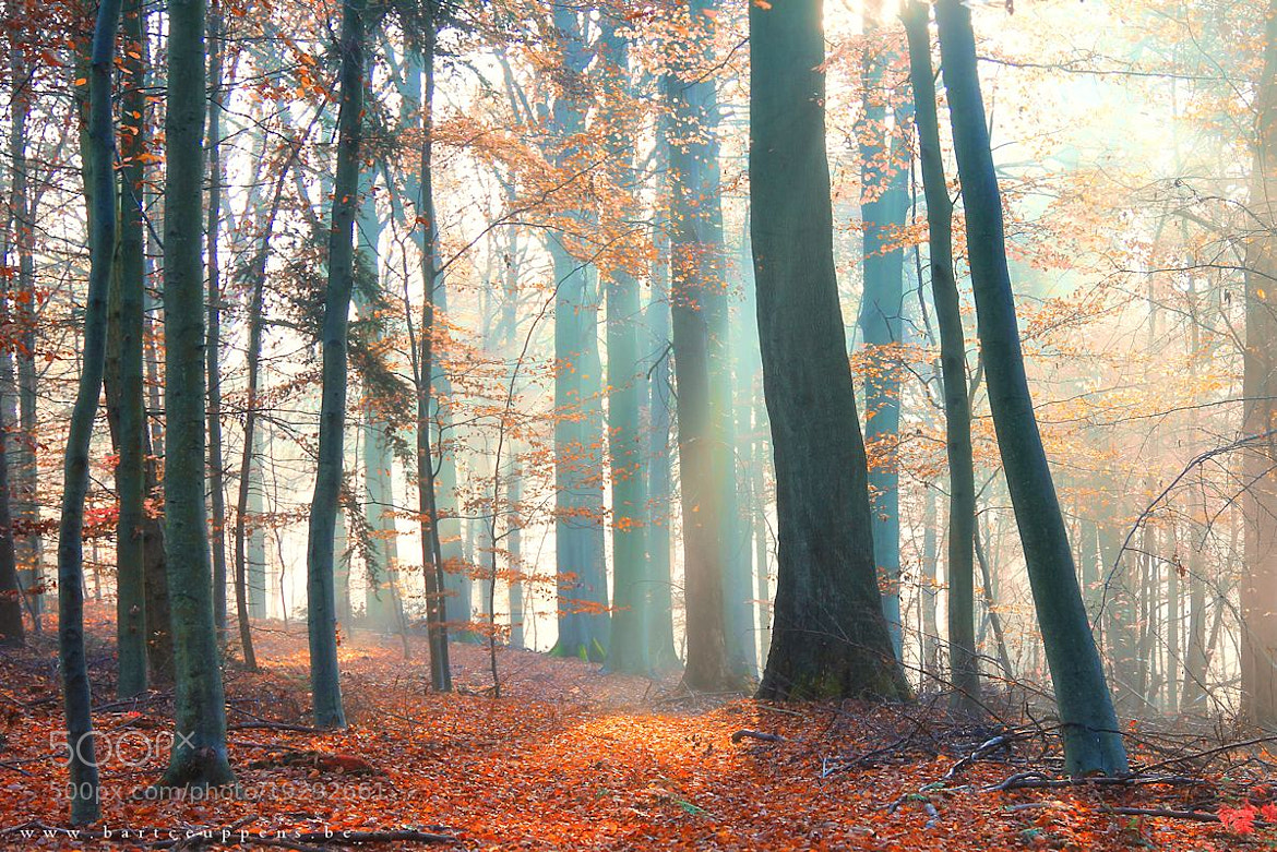 Photograph autumn mood 4 by Bart Ceuppens on 500px