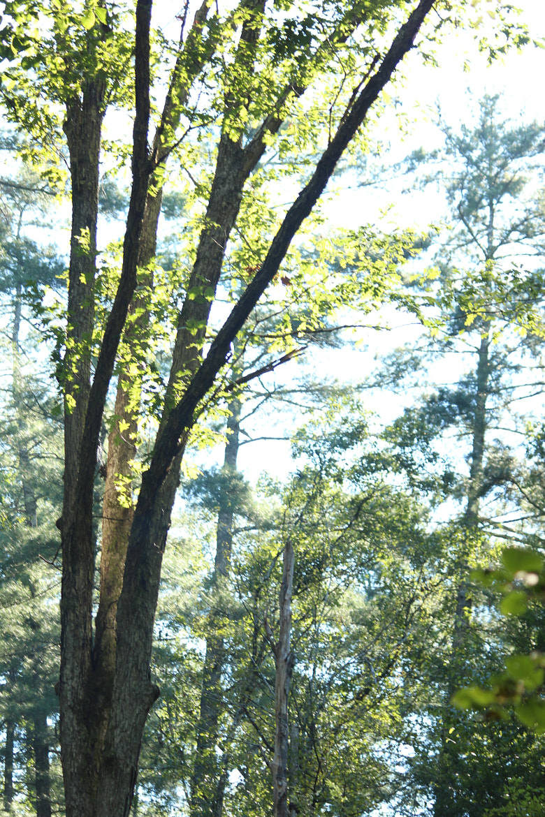 Photograph Hiking trail trees by John Schlesser on 500px