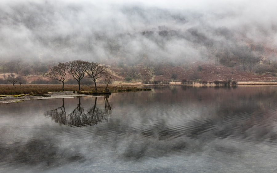 Crummock trees in the mist