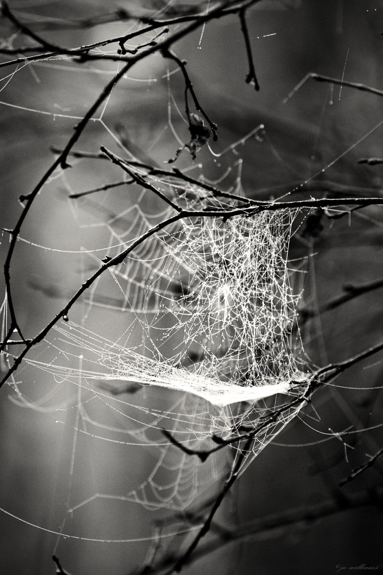 Photograph A Tangled Web we Weave ................ by jo williams on 500px