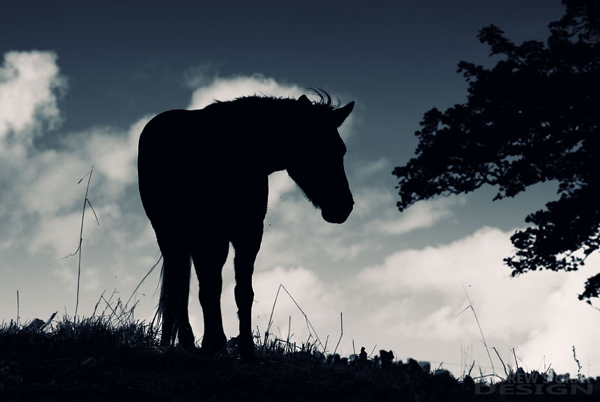 Photograph Horse Silhouette by Andy Gray on 500px