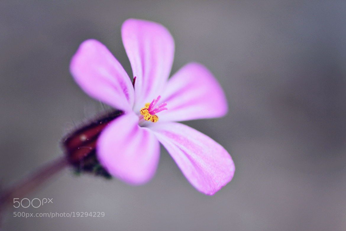 Photograph Pink by Topea Gina on 500px