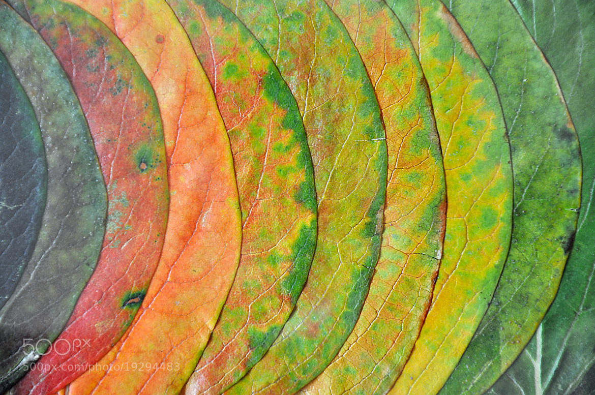 Photograph Colorful leaves by Alireza Faghiri on 500px