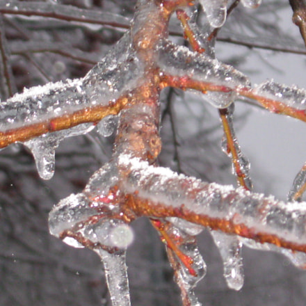 trees frozen in ice, Canon POWERSHOT A580
