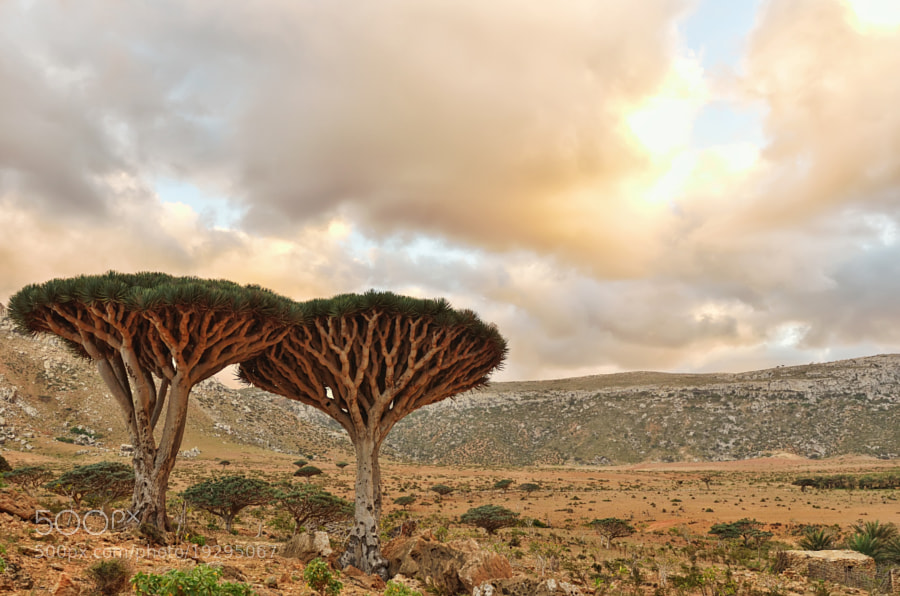 Photograph Dragonblood Trees by Csilla Zelko on 500px