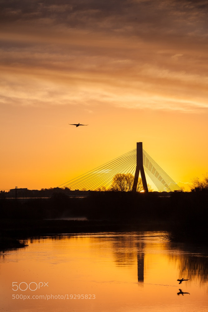 Photograph Boyne Cable Bridge by Richie Hatch on 500px