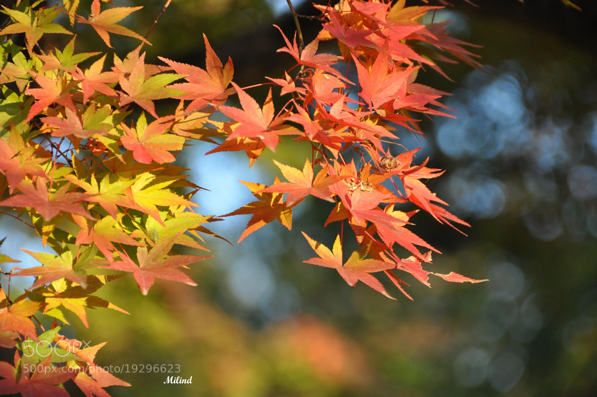 Photograph FALL COLORS by मि. देशमुख on 500px
