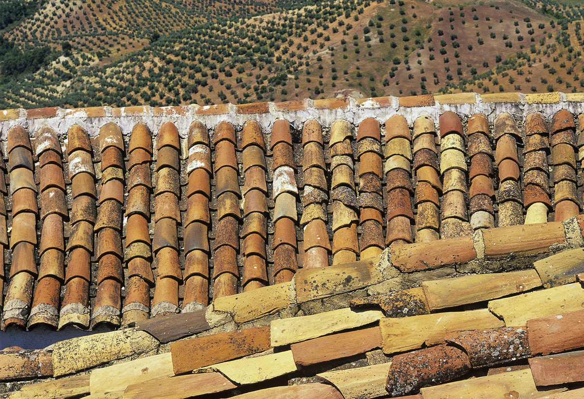 Photograph Pantiles and Olive Groves by Ian Cameron on 500px