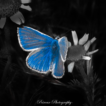 Blue butterfly, Canon DIGITAL IXUS 80 IS