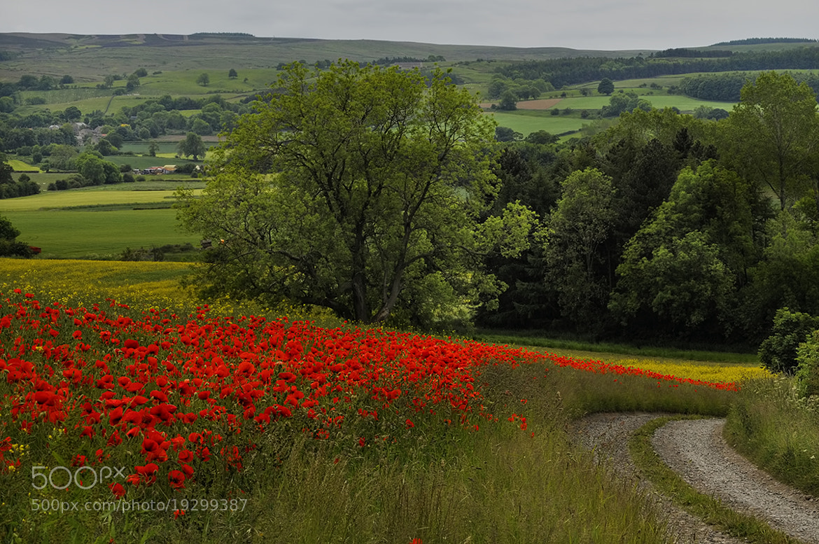 Photograph Poppies by Richard Tierney on 500px