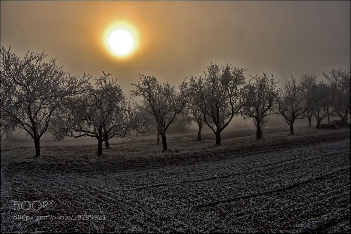 Photograph Fog and Sun by Ulrich Fleischer on 500px