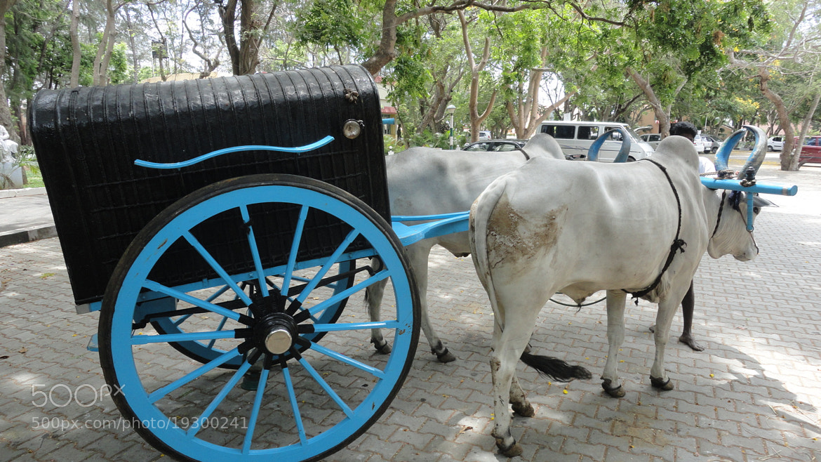 Photograph Bullock Cart by Banalata Pal on 500px
