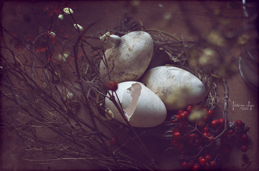 Photograph Nest by Olga Firsova on 500px