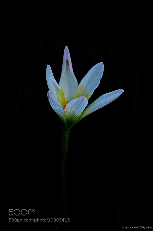 Photograph single flower... by Leena'z Anilzam on 500px