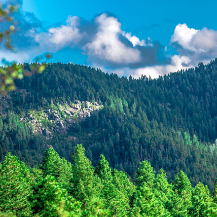 The green forests of, Canon EOS 5D MARK III, Canon EF 200mm f/2.8L