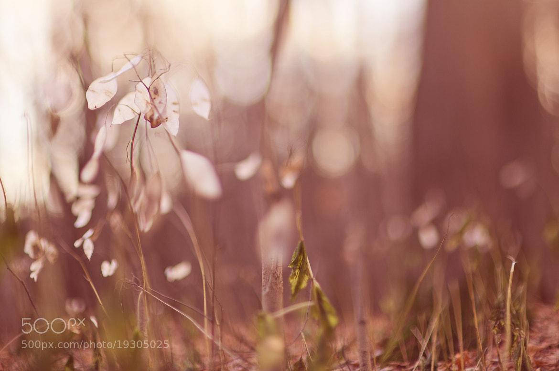 Photograph Tilted autumn #12. by Sergey Kuznetsov on 500px
