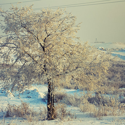 #26, Canon EOS 60D, Sigma 18-50mm f/2.8-4.5 DC OS HSM