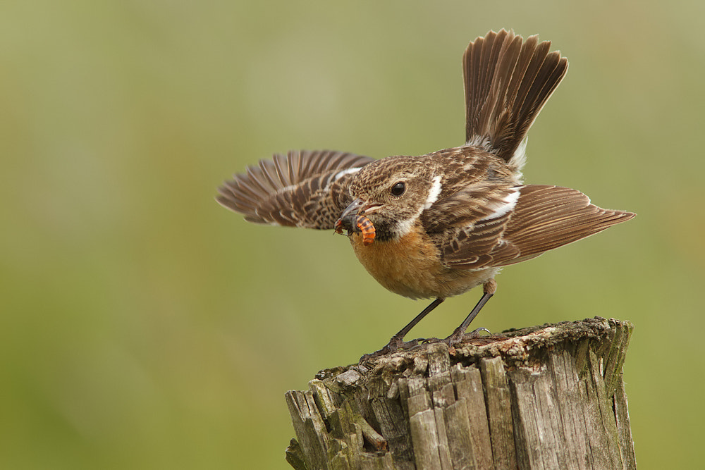 Photograph Spread your wings by Tom  Kruissink on 500px