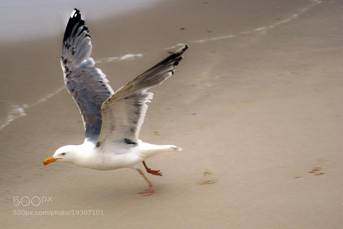 Photograph Taking Flight by Jack Labor on 500px