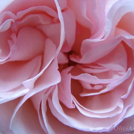 Rose's heart