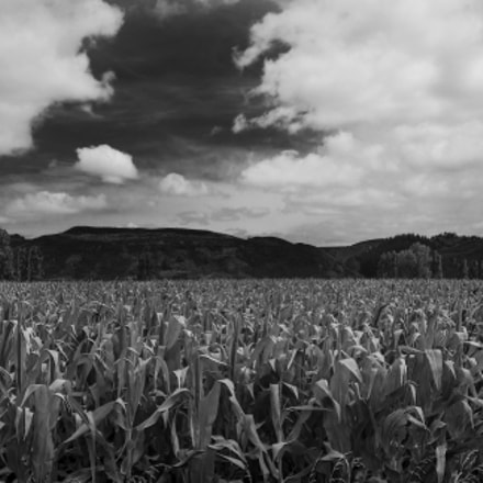 Golden Fields Of Corn, Pentax K10D, smc PENTAX-F 35-105mm F4-5.6