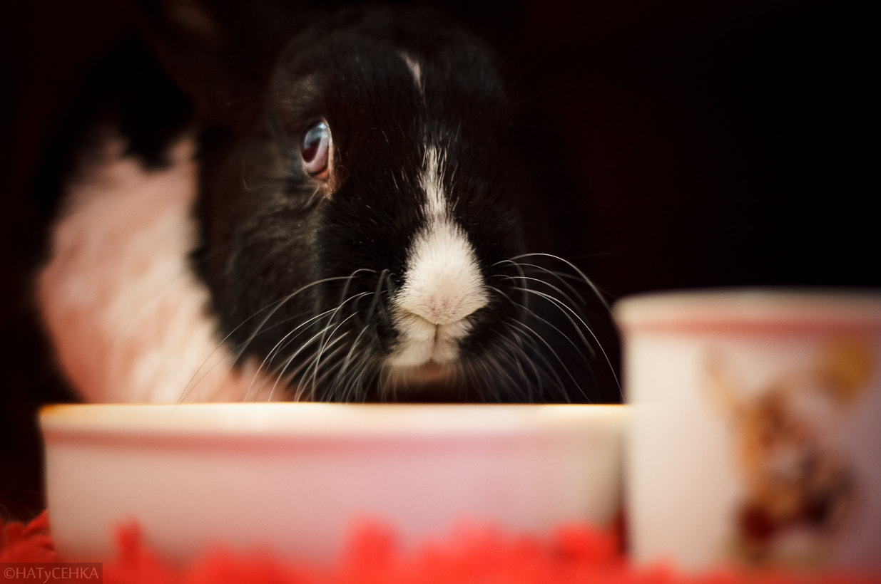 Photograph Rabbit dines by HATyCEHKA  on 500px