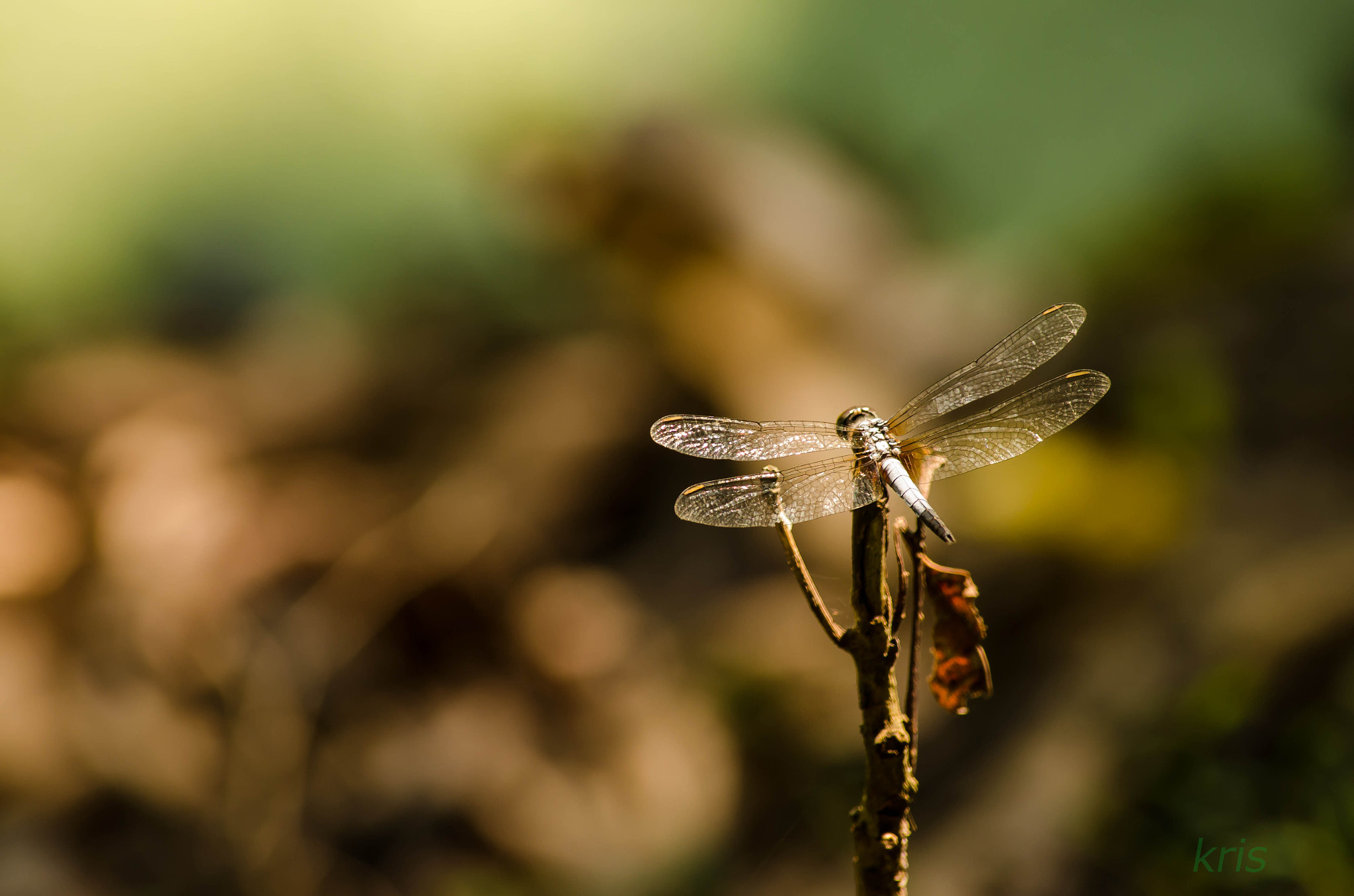 Photograph dragon fly  by Krishna Kumar on 500px