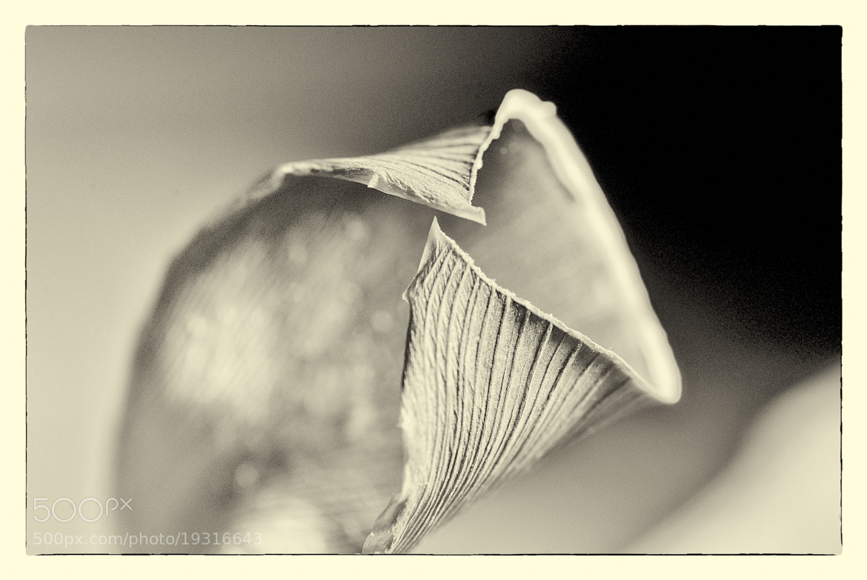 Photograph Dried Leaf by Florian Szasz on 500px