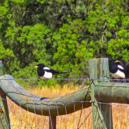 My Little Magpies, Canon POWERSHOT G16