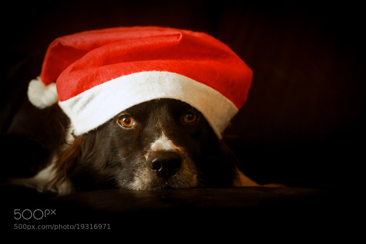 Photograph wonderful christmas time ? by Mathias Ahrens on 500px