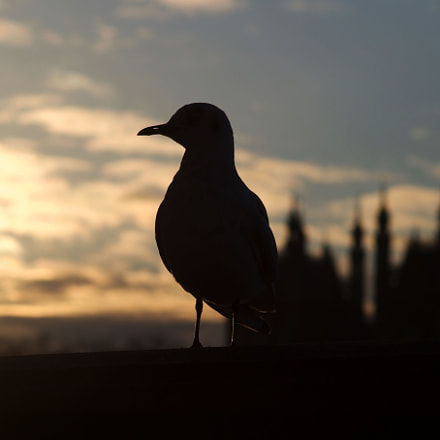 Bird at sunset by, Sony SLT-A58, Sigma 70-300mm F4-5.6 DL Macro
