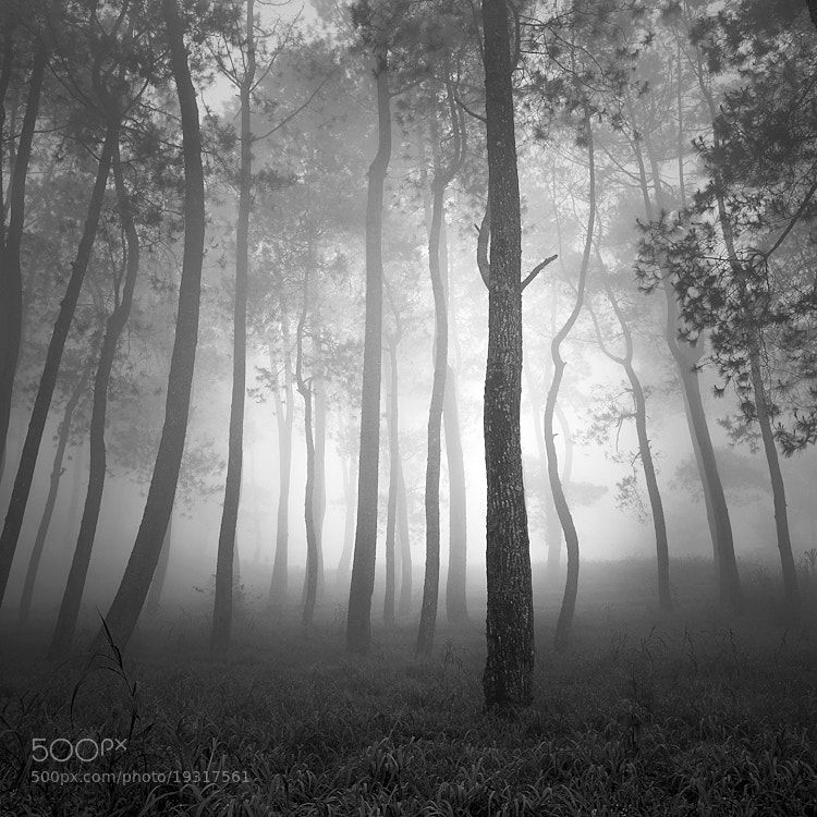 Photograph Tropical Forest by Hengki Koentjoro on 500px