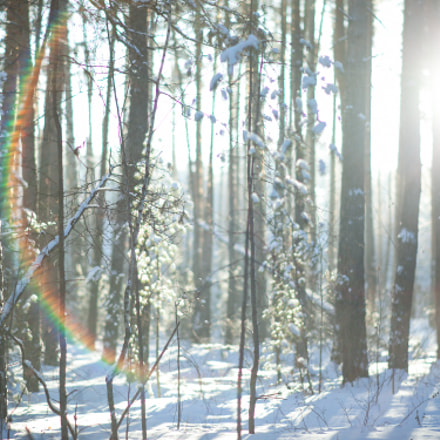 Russian forest, Canon EOS 5D MARK II, Canon EF 28-80mm f/3.5-5.6