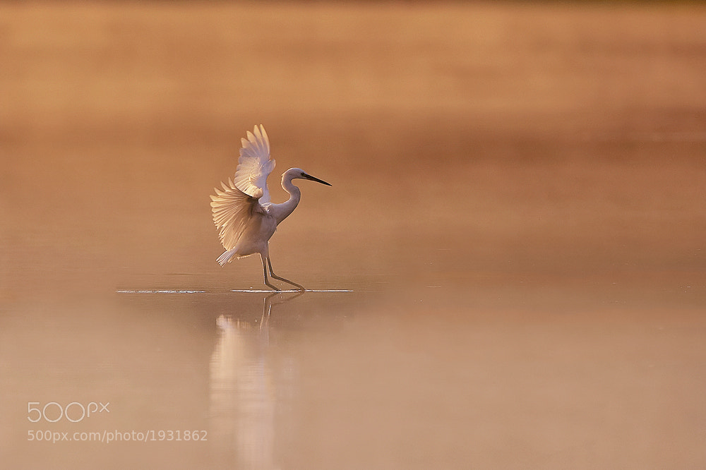 Photograph Pond Skater by Dale Sutton on 500px