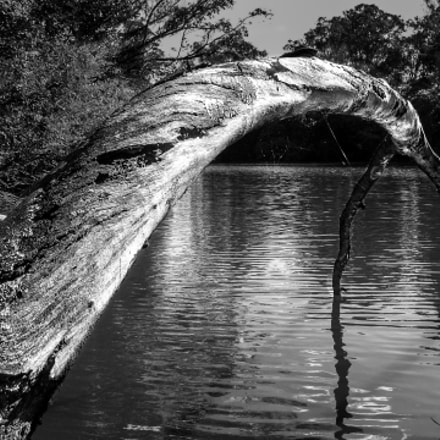 Tree on the water, Canon POWERSHOT A610