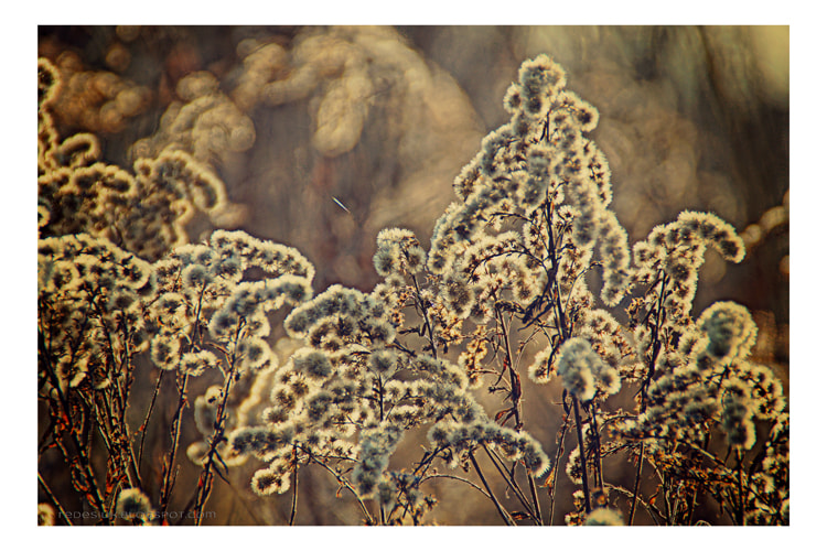 Photograph fall by Joanna Redesiuk on 500px