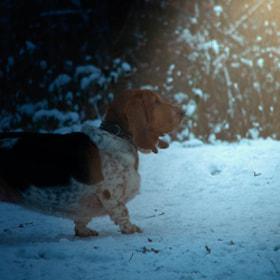Photograph winterLight by Lukas Bachschwell