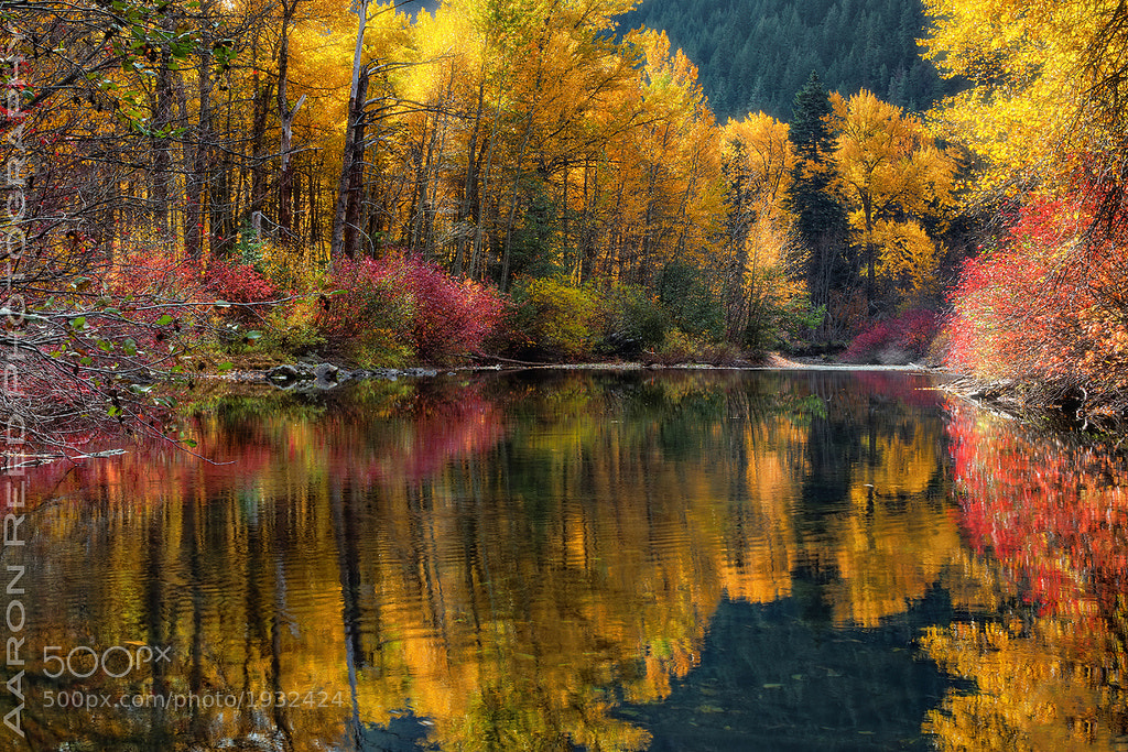 Photograph I Dream In Color by Aaron Reed on 500px