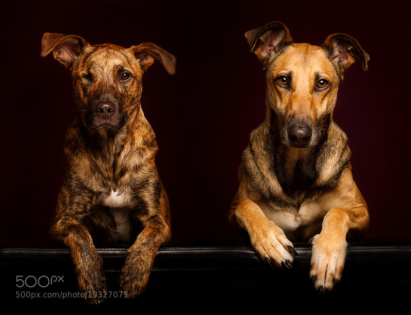Photograph My joy and recreation by Elke Vogelsang on 500px